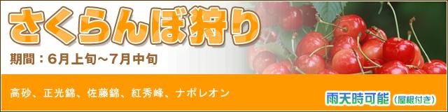 【さくらんぼ狩り】オープン予定:6月上旬~7月上旬(30分間食べ放題!)